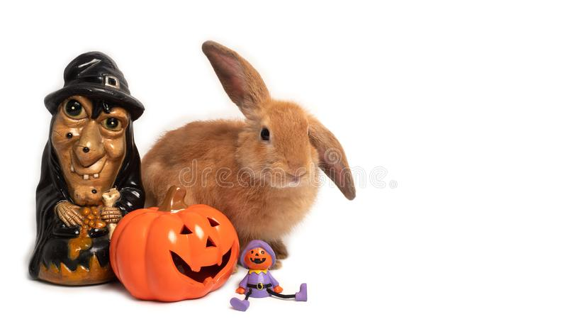 Rabbit sitting with Halloween decor. royalty free stock photos