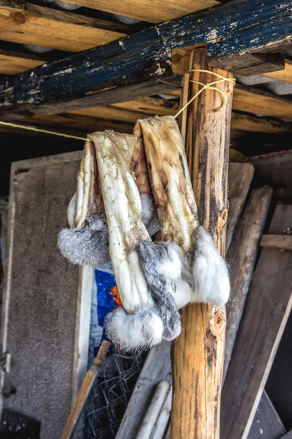 Rabbit skins on the rope. In the village stock photos