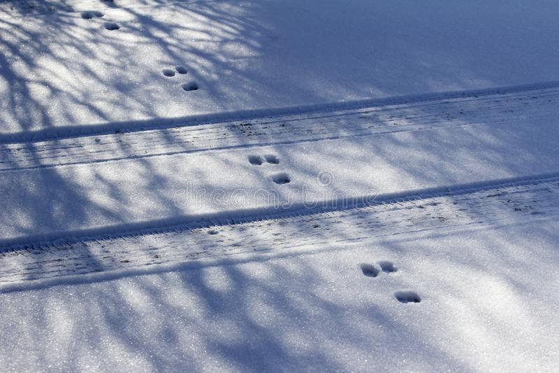 Rabbit tracks crossing car tracks in snow ground texture stock photography