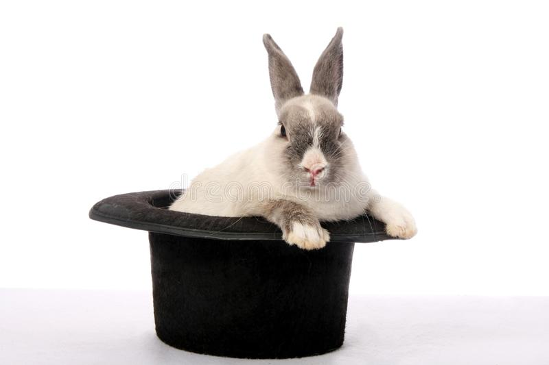 Rabbit Trick. Cute bunny rabbit climbing out of a black hat royalty free stock photo