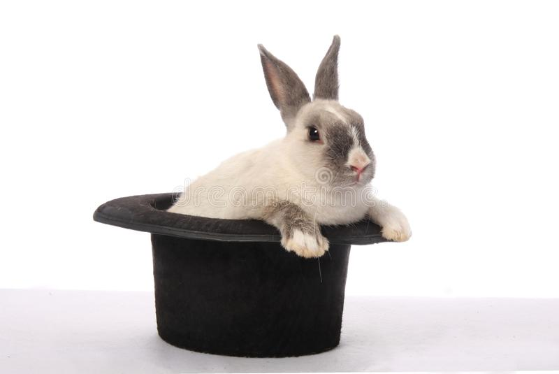 Download Rabbit Trick stock photo. Image of playful, rodent, furry - 13837026