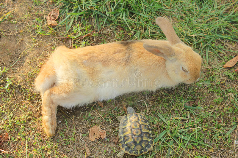 Rabbit and the turtle stock photo