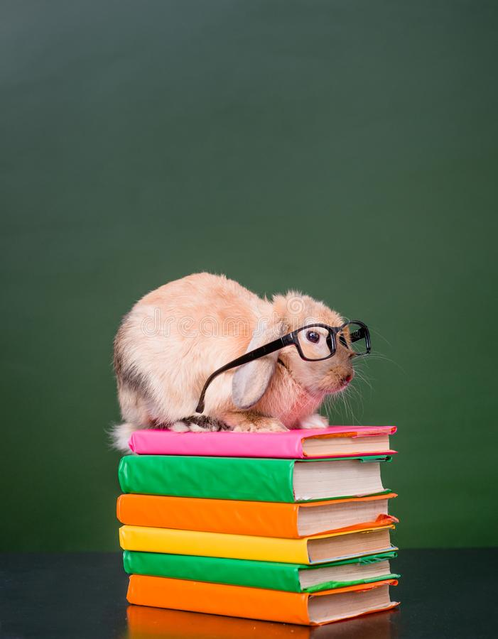 Rabbit wearing glasses sitting on a pile of books near empty chalkboard.  royalty free stock images