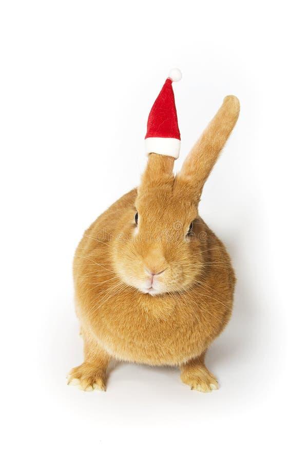 Rabbit wearing santa hat stock image