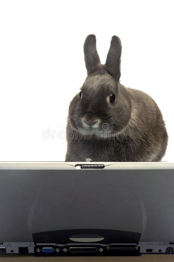 Rabbit webmaster royalty free stock photography