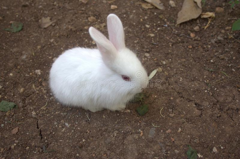 Rabbit stock photos