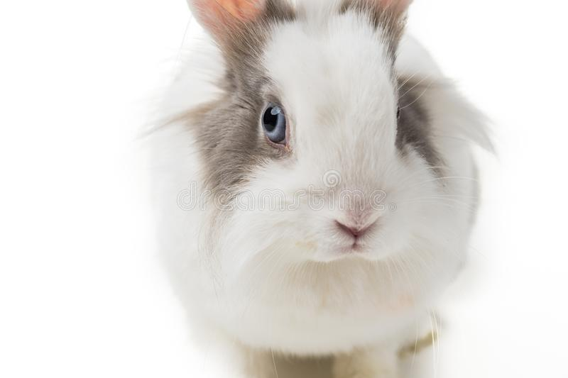 Rabbit on white background, close up. royalty free stock photos