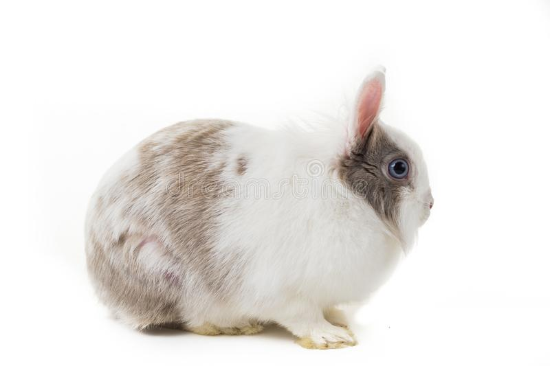 Rabbit on white background, close up. stock photo