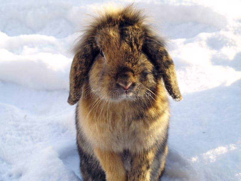 Download Rabbit in the winter stock photo. Image of rabbit, winter - 28639340