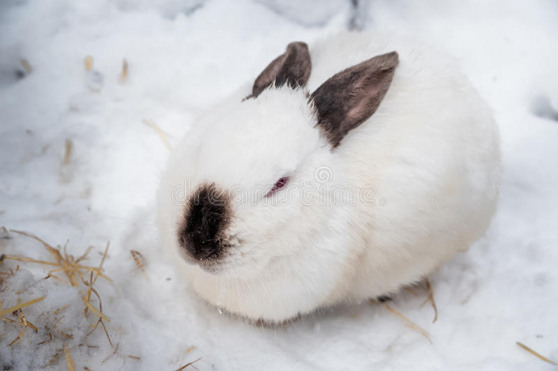 rabbit in the winter gray and white bunnies in winter on. Black Bedroom Furniture Sets. Home Design Ideas