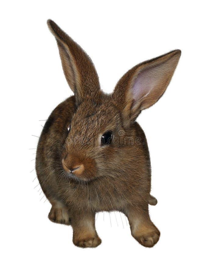 rabbit1 zdjęcia stock