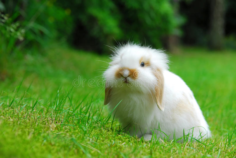 Download Rabbit8 stock image. Image of green, mammal, snack, curious - 9983595
