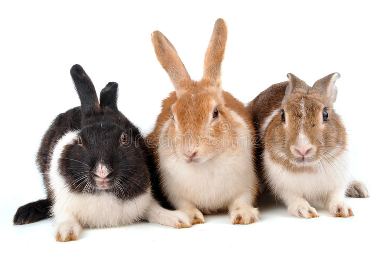 Rabbits. Cute rabbits groups on white stock photo