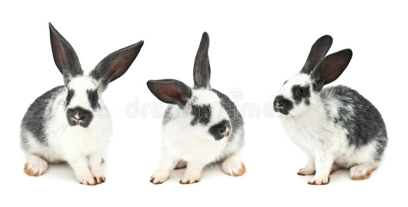 Rabbits. Isolated on white background royalty free stock photos
