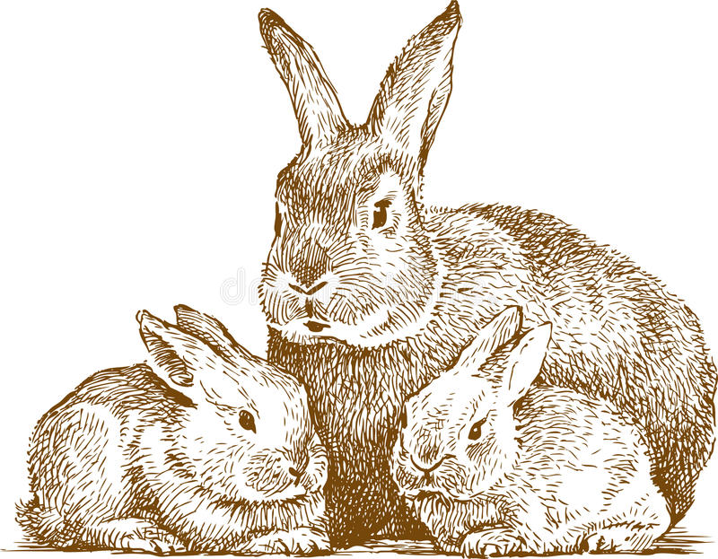 Rabbits. Vector drawing of a rabbit with two cubs