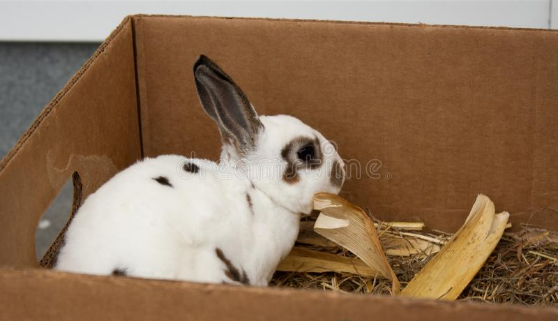 Rabbits on the animal market in Mol, Belgium royalty free stock images