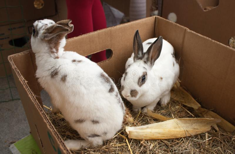 Rabbits on the animal market in Mol, Belgium stock images