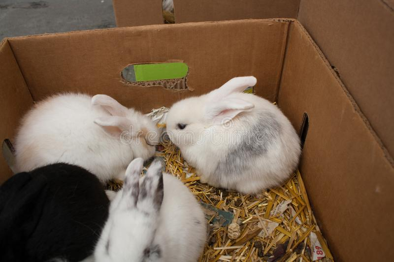 Rabbits on the animal market in Mol, Belgium royalty free stock photography