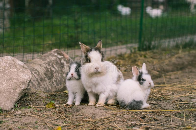 Rabbits. stock images