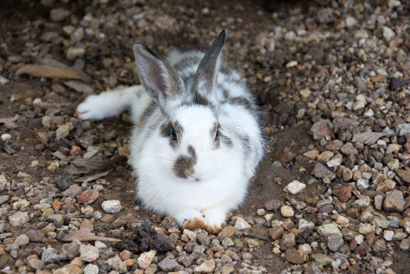 Rabbits bunny in the garden. Rabbits bunny animal stock photo