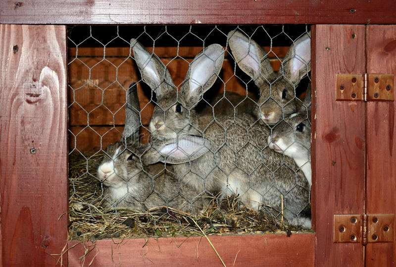 Download Rabbits In Cage Royalty Free Stock Photos - Image: 21481748