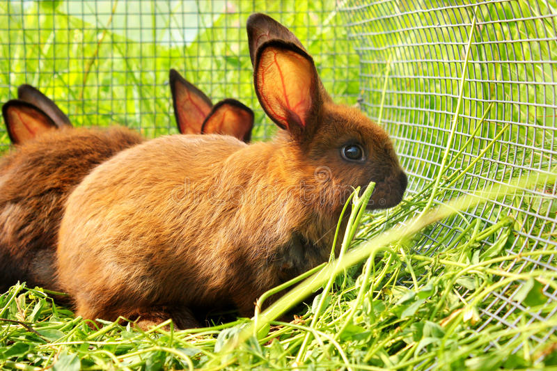 Rabbits in a cage. Bunnies behind the bars.  royalty free stock images