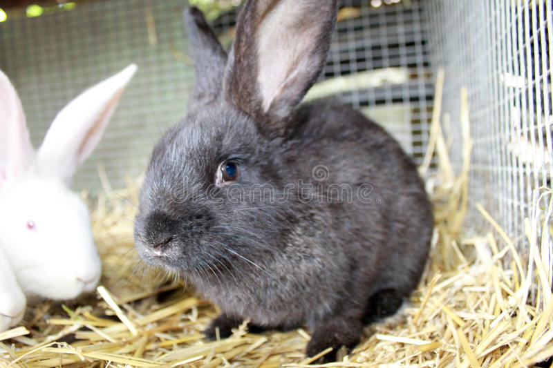Rabbits in cage. Young rabbits in a cage royalty free stock photos