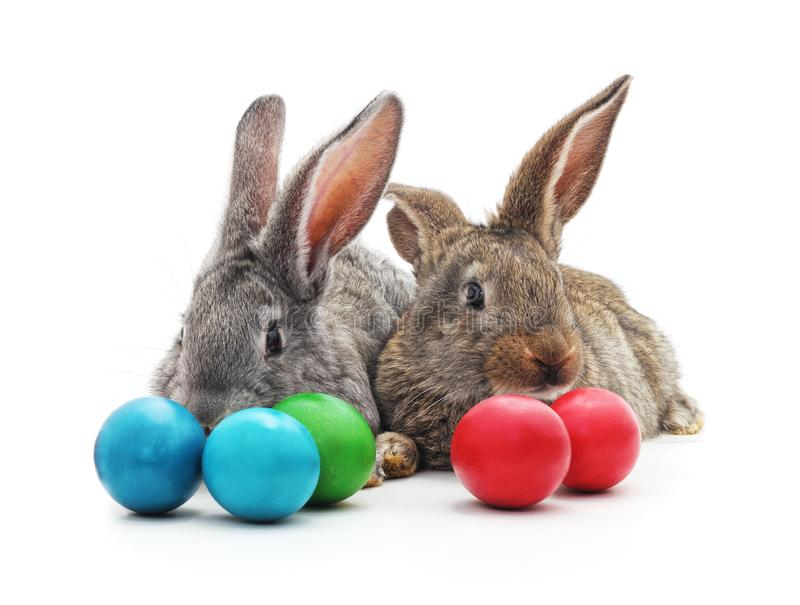 Rabbits and Easter eggs stock image