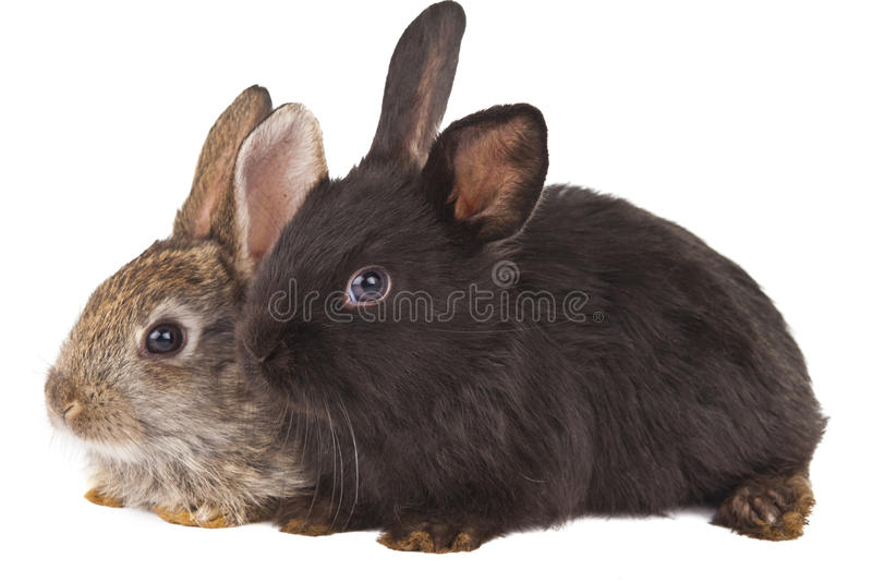 Download Rabbits Isolated Royalty Free Stock Image - Image: 27852986