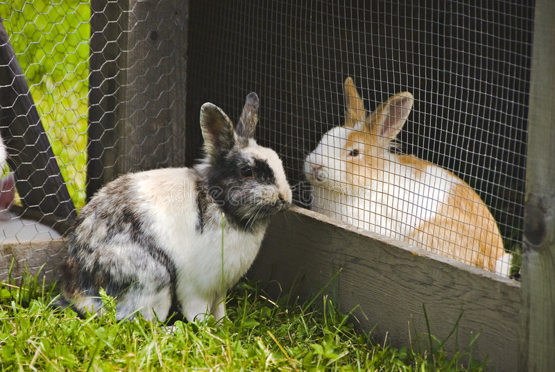 Download Rabbits In Love Stock Image - Image: 3917901