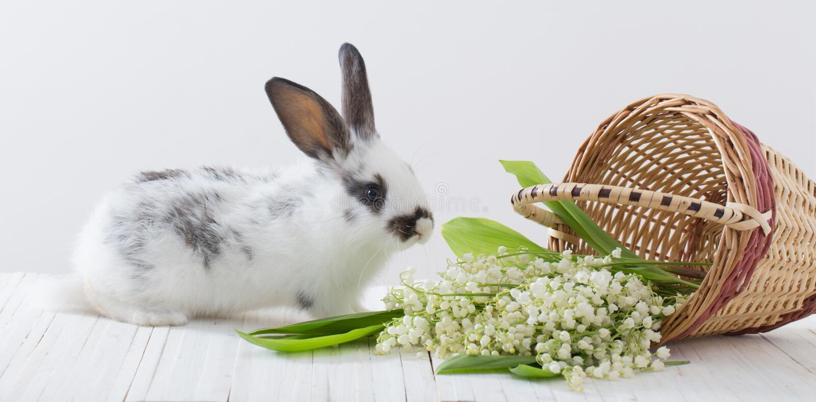 Rabbits with spring flowers on white background. Little rabbits with spring flowers on white background stock photography