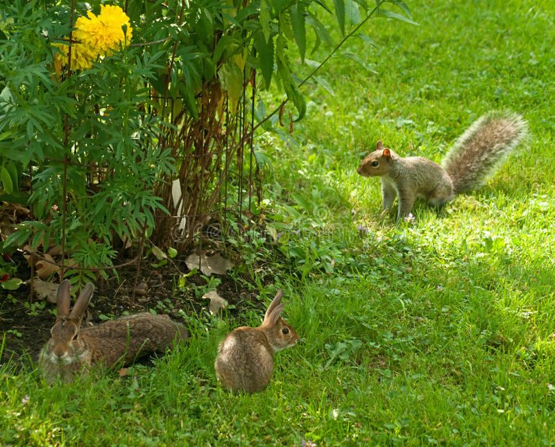 Download Rabbits And Squirrel Stock Photo - Image: 20381740