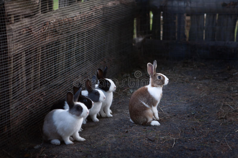 Rabbits in there paddock royalty free stock photo