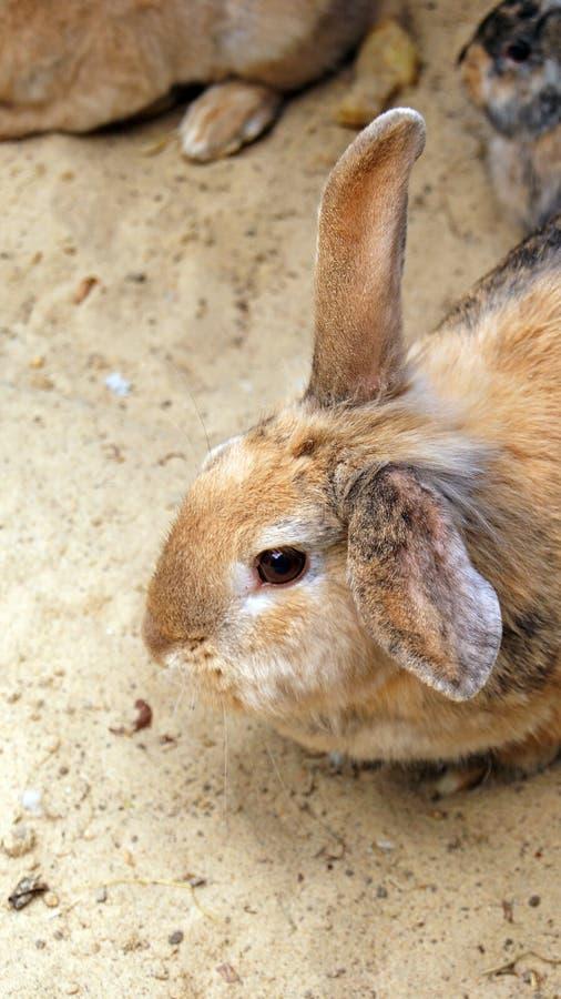 Download Rabbits stock photo. Image of fluffy, animal, soft, rabbits - 31625150