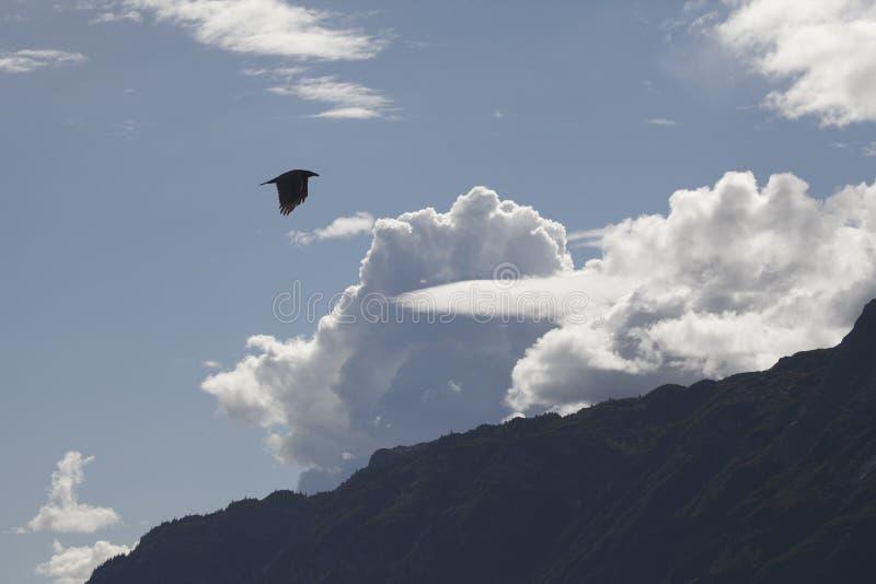 Rabe mit Bergen und Wolken lizenzfreies stockbild