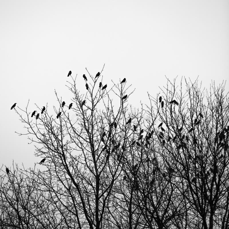 Raben auf den Bäumen lizenzfreies stockbild