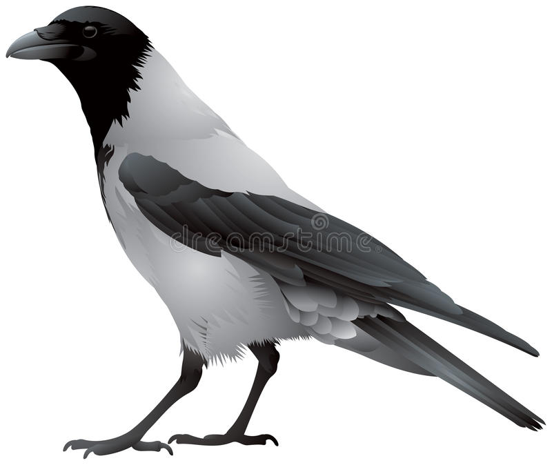 Rabenkrähevogel lizenzfreie abbildung