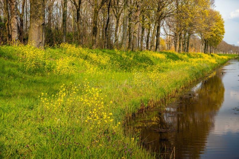 Rabina amarilla y otras plantas silvestres que florecen en la cuesta de un terraplén foto de archivo