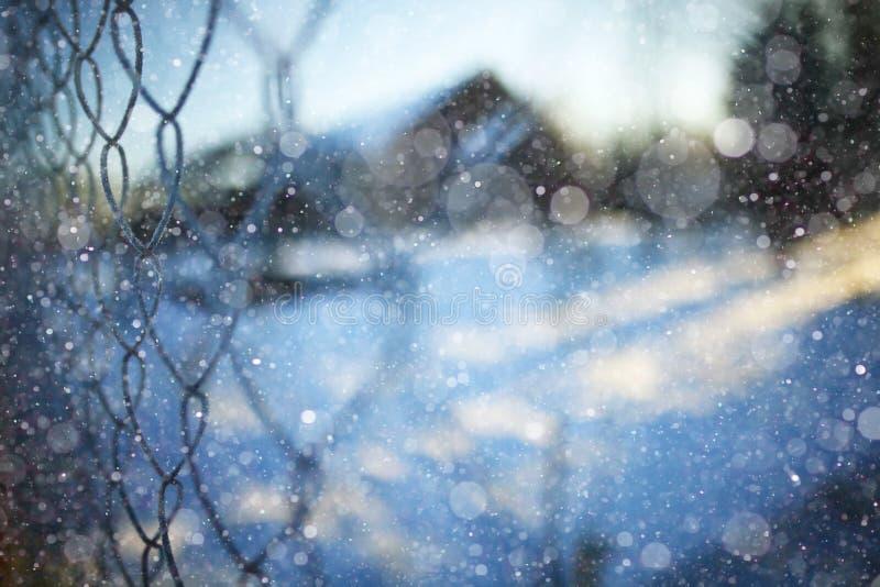 Rabitz op de winterachtergrond royalty-vrije stock foto's