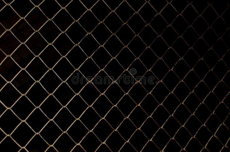 Rabitz sul nero fotografie stock libere da diritti