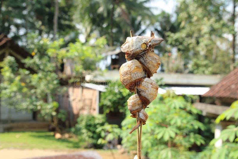 Rabo-de-cabeça-chata fumado no Bambu Stick imagens de stock