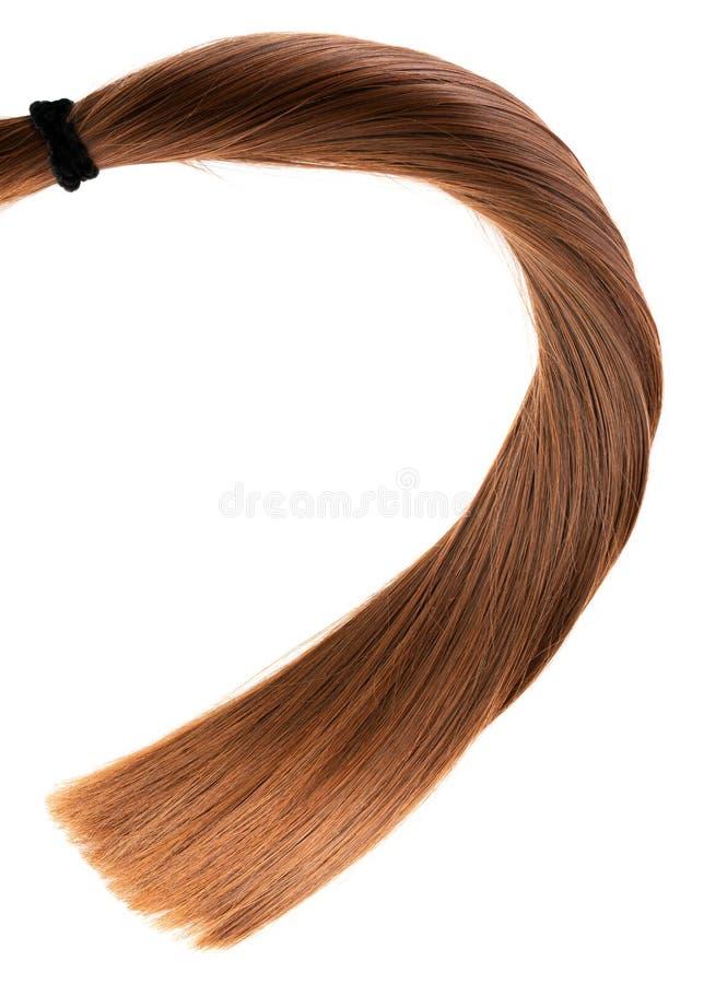 Rabo de cavalo marrom reto saudável longo do cabelo no fundo branco fotos de stock royalty free