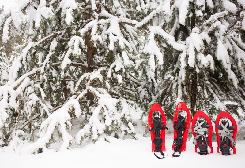 Racchette da neve nella foresta fotografia stock libera da diritti