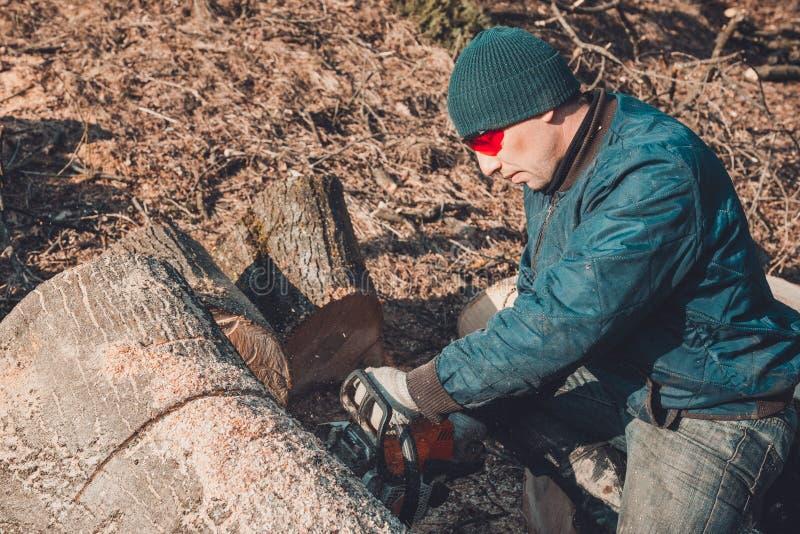 Raccogliendo la legna da ardere per l'inverno, un uomo in vetri ha tagliato un albero dalla motosega che lo tiene in sue mani fotografia stock