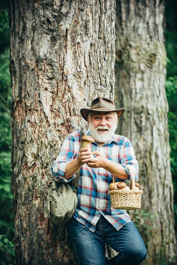 Raccoglitrice del fungo Nonno felice - estate ed hobby Camminare dell'uomo anziano Pensionato del nonno Escursione senior nella f immagine stock libera da diritti