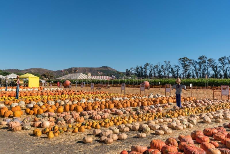 Raccolga il campo di festival con le zucche e gli spaventapasseri, ONU di Moorpark immagini stock