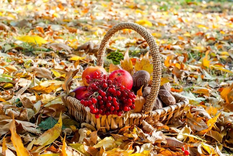 Raccolga la mela, il mirtillo rosso, funghi in un canestro immagine stock