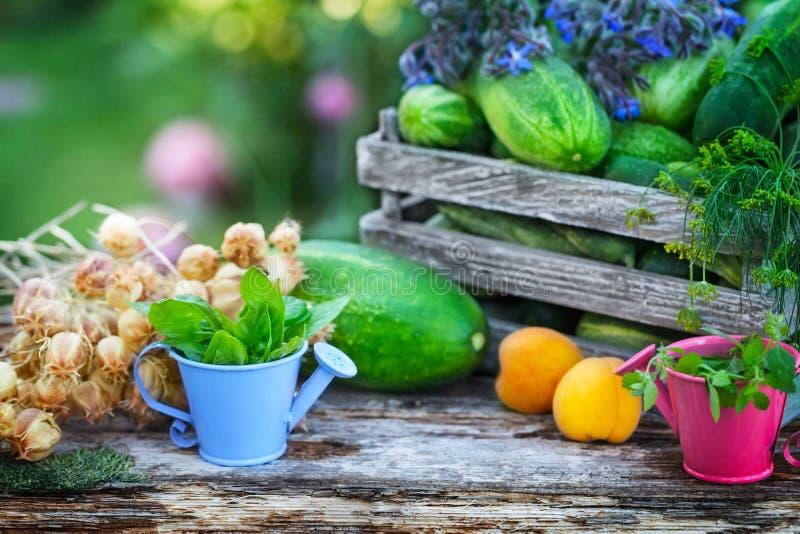 Raccolga nel giardino, i cetrioli, le albicocche, erbe immagine stock libera da diritti