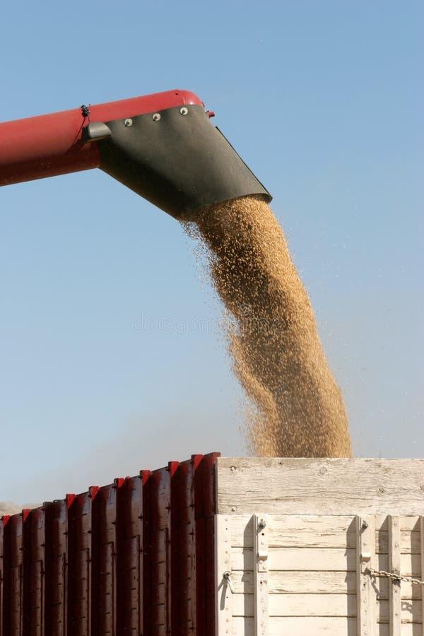 Download Raccolta immagine stock. Immagine di crops, risorsa, alimento - 207065