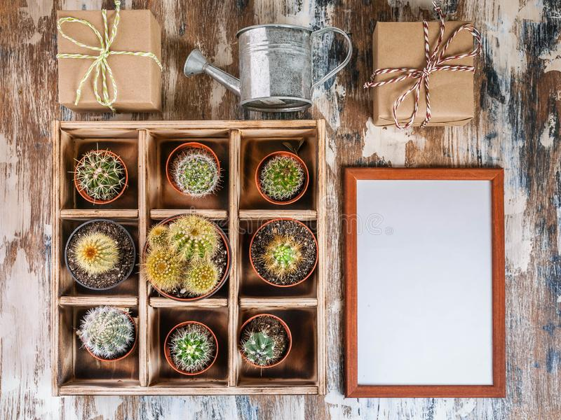 Raccolta alta falsa dei cactus in scatola di legno Foto di vari tipi di cactus Tonalit? di immagine Vista superiore fotografia stock
